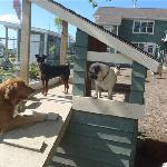 "Our custom built dog house ""The Howl-a-day Inn"""