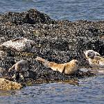  Seals, photographed during the lake tour