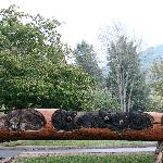  Log carvings.