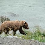 bear on the river