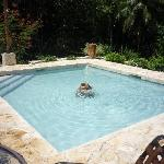 Lilly Pool
