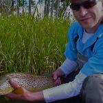 "24"" Bow River Brown Trout"