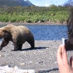  Close Encounter at Hallo Bay Bear Camp