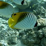 Aitutaki Glass Bottom Tour