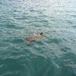 Turtle in harbour