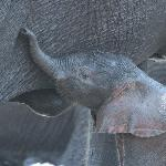  Baby Elephant just crossed the River