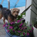 Lucy our resident Welsh Terrier will show you around