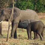 Central African Wilderness Safaris Mvuu Lodge의 사진