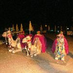 camels at Turkish night