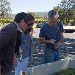 Reviewing the latest selection of grapes at Loxton Winery