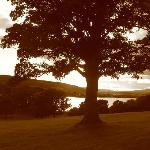Cloudside Bed & Breakfast Foto