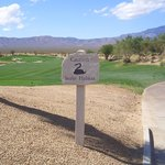 Primm Valley Golf Club - Desert Course