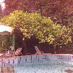 Lemon trees above the pool