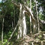  Vegetation in Calakmul