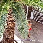palm tree in courtyard during day