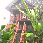  tarzan nature view baeutiful treehouse1