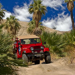 Jeep in a Natural Palm Oasis