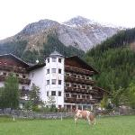 Cows graze right outside the Tauerwirt, in the shadow of the Glodis mountain