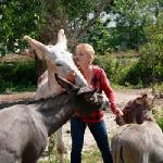 meet the donks, meet & greet included in your visit