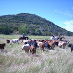  Running R Cattle Drive