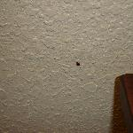  A bedbug I didn&#39;t kill