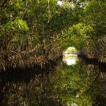 Airboat trip through the mangroves