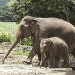 Baanchang Elephant Park - Private Day Tours