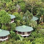 Tulemar Bungalows are nestled into the jungle. (28404110)