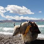 Namsto Lake. You can ride a yak.