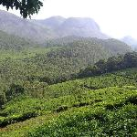 Foto de The Tea Sanctuary