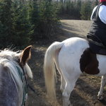 Horse Trekkin Alaska