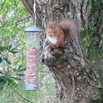 Creagan House red squirrel