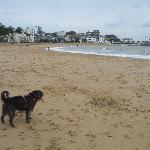  Our dog loved the beach at Broadstairs! (It was October)