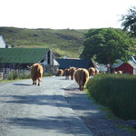 Rush Hour in The Highlands of Scotland!