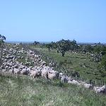It remains a working sheep and cattle farm