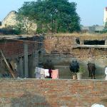 Village Buffaloes from roof top