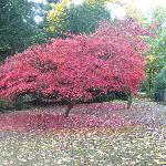 Westonbirt Arboretum