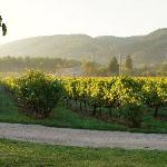 Sunrise on the vineyards at La Bastide de Marie
