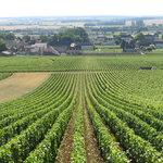 Burgundy Discovery