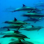 Dolphin Excursions Snorkel Adventure