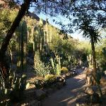 a stroll through the cactus garden