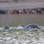  River dolphins!