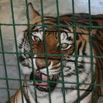 Big Cat Habitat and Gulf Coast Sanctuary