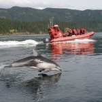 Campbell River Whale Watching and Adventure Tours