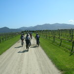 Explore Marlborough Private Tours