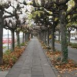  Rheinpromenade