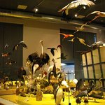National Museum of Natural History (Naturalis) Foto