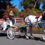 Tally-Ho Carriage Tours