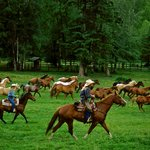 The Lodge horse herd