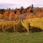 REX HILL Vineyard in autumn